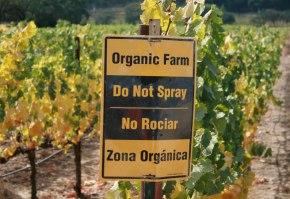 Organic-Winery
